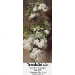 Trandafiri albi de Paul Delongpre