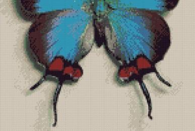 Fluturaș albastru