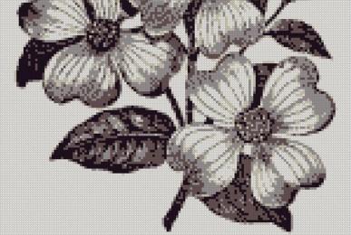 floare nemuritoare