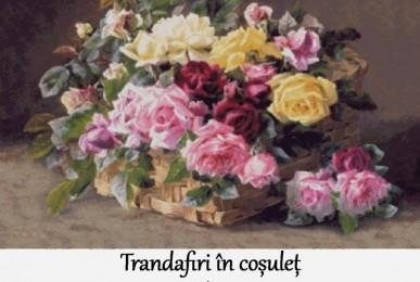 trandafiri-in-cosulet